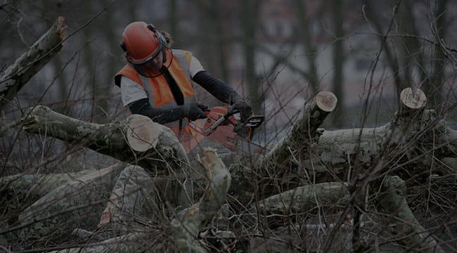 Charleston Tree Service